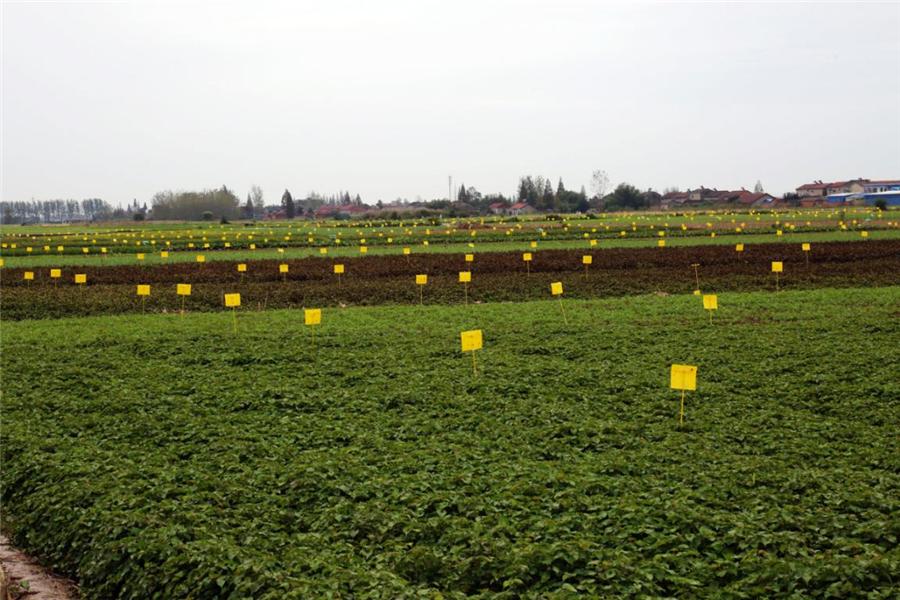 長坂坡下五谷豐 湖北當陽大力發展農業産業化機械化