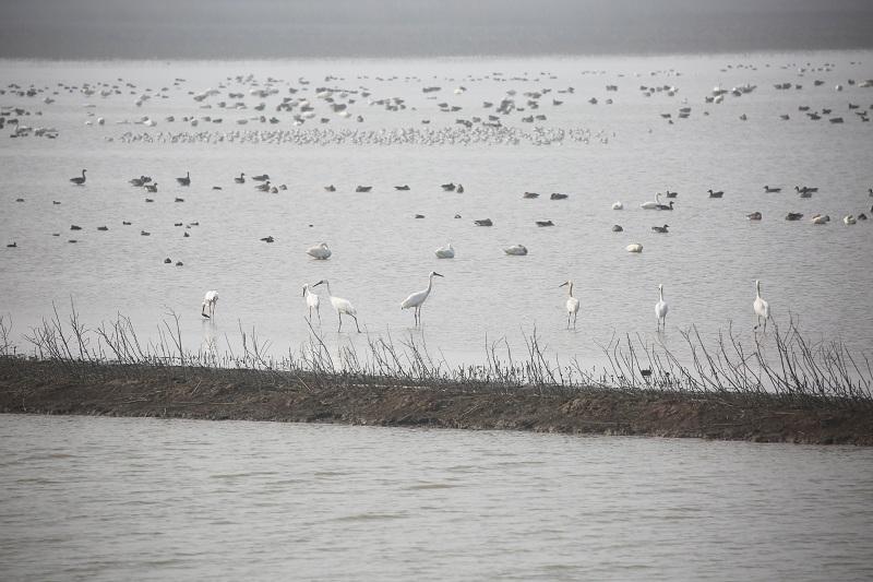 (新春走基層)生態修復環境美 沉湖濕地鳥翩躚