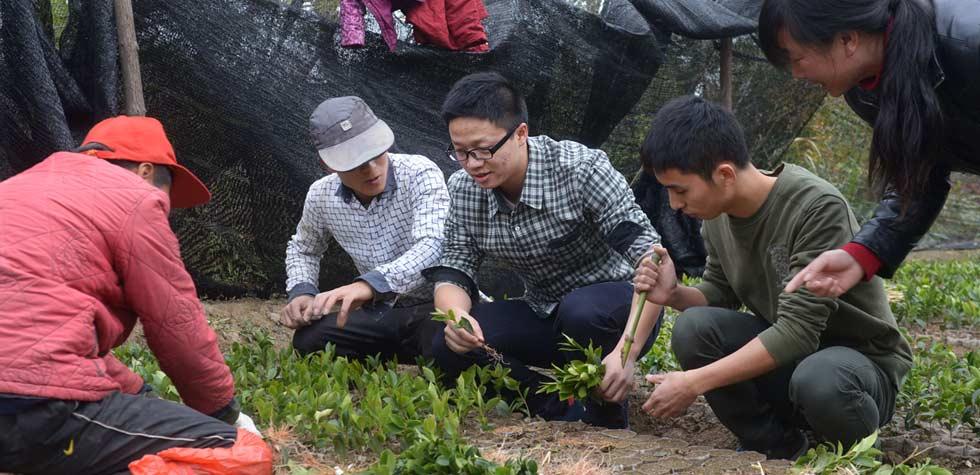 青年学员秦钰杰(左三)在湖北省大悟县河口镇田间体验茶树育苗
